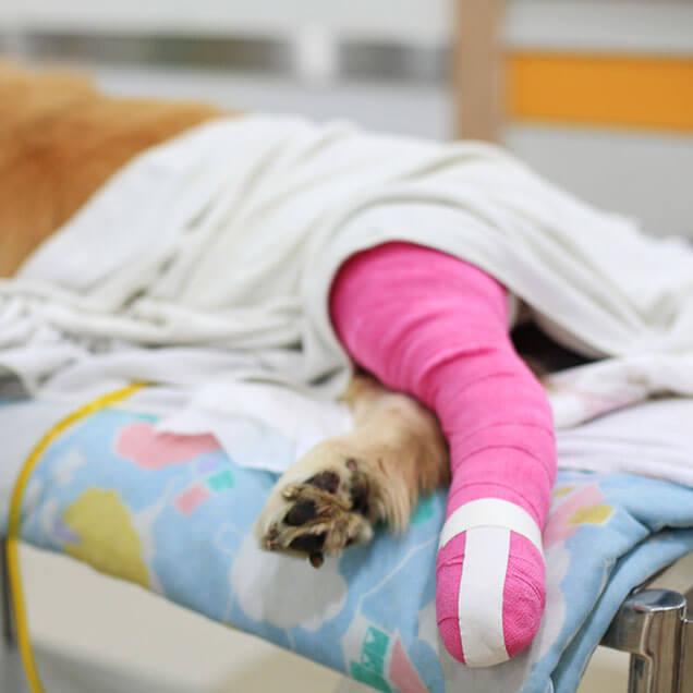 Pet Surgery Greensborough